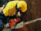 Фото в   Профессиональная работа с деревьями. Выполнение в Железнодорожном 1000