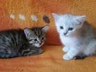 Уникальное foto Отдам даром - приму в дар Отдам котят 35249894 в Кургане