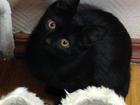 Уникальное фото  Отдам котят в добрые руки 37355261 в Москве