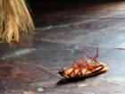 Новое изображение  Как избавиться от запаха отравы в квартире, после уничтожения клопов, блох, тараканов? 37444470 в Москве