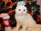 Новое фотографию  Шотландские котята и карликовые крольчата 37958142 в Москве