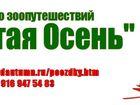 Фотография в   Поездки на выставки с собаками по России в Москве 1000