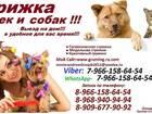 Скачать фотографию  Стрижка кошек и собак вызов выезд на дом груминг животных 38736212 в Балашихе
