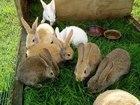 Фото в   Предлагаем не дорого корм для кроликов в в Екатеринбурге 1
