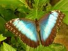 Уникальное изображение  Яркие Живые Бабочки изПакистана 40823764 в Краснодаре