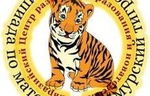 Олимпиада по математике Амурский тигренок