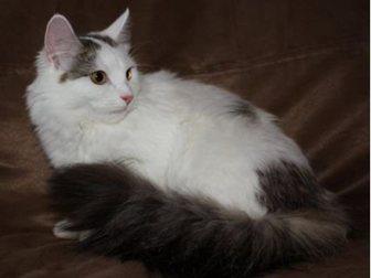 Скачать бесплатно изображение  Кошка-крошка Нэнси 32713464 в Москве