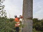 Фотография в   Спил - деревьев в городской черте и Курской в Курске 0