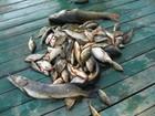 Свежее фото  База отдыха на Волге, Рыбалка,Охота,Отдых семьей 35339582 в Липецке
