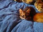 Фото в   Отдам замечательных котят : одна девочка в Липецке 0
