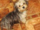 Фото в Собаки и щенки Продажа собак, щенков Мальчики Цветной болонки от 4 мес  Привиты в Люберцы 7000