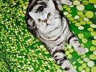 Увидеть foto Вязка кошек Кот Герман! ищет кошечку для вязки 39581028 в Люберцы