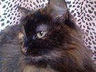 Изображение в Кошки и котята Продажа кошек и котят В связи с переездом отдам в добрые руки стерилизованную в Магнитогорске 0