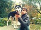 Фото в Потерянные и Найденные Потерянные Пропала собака  породы сибирский хаски, девочка, в Магнитогорске 0