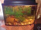 Фото в Рыбки (Аквариумистика) Купить аквариум Продам аквариум с крышкой, подсветкой, компрессором, в Магнитогорске 2000