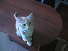 Отдам в добрые руки котенка 2, 5 месяца-рыжий