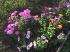 Скачать foto Сады Продам сад в СНТ Машиностоитель 74324049 в Магнитогорске