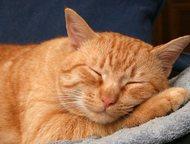 потерялся котик В районе К. Маркса дом 3 потерялся котик рыжий. Домашний спрыгну