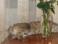 Пропал кот Сегодня 3, 07 ночью выпал или выпрыгнул с балкона дома Ворошилова 1 (