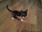 Фото в Отдам даром - Приму в дар Отдам даром Люди помогите пристроить домашних котят до в Махачкале 100