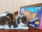 Уникальное изображение  Когтедралки для кошек в Волгограде, 35432034 в Волгограде