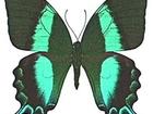 Просмотреть фотографию Купить аквариум Живые тропические бабочки- Лучшие подарки на любые праздники! 38639706 в Махачкале