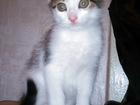 Смотреть фотографию Приму в дар котята ищут дом 33569365 в Минске