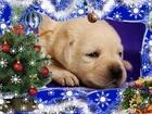Фотография в Собаки и щенки Продажа собак, щенков Открыта запись на щенков!     При выборе в Минске 800