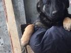 Смотреть изображение  щенки в дар 38432720 в Минске