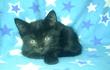 Котята тигровые и черные, возраст 2 месяца,