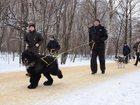 Фотография в Собаки и щенки Продажа собак, щенков Прекрасные, очень активные малыши ищут своих в Москве 25000