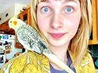 Изображение в Домашние животные Птички Семья примет в дар попугая, канареек, декоративных в Москве 0