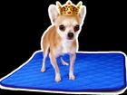 Фотография в Одежда и обувь, аксессуары Аксессуары Многоразовые пеленки для собак и других животных. в Москве 690