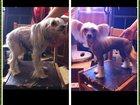 Фото в Домашние животные Услуги для животных Стрижка (тримминг) Вашего питомца у Вас на в Москве 1000