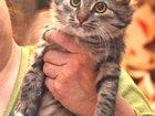 Фотография в   Очень нужен дом! ! !   Котёнок-чертёнок по в Москве 0