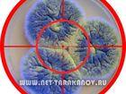 Изображение в Красота и здоровье Разное Компания Тараканов Нет, проводит ряд мероприятий в Москве 5500