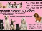 Уникальное изображение Разные услуги Стрижка кошек и собак Выезд на дом в любой район Москвы и Московской области 36912254 в Москве