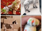 Фотография в Домашние животные Разное Стрижка собак и кошек в ЗАО/СЗАО.   БЕСПЛАТНАЯ в Москве 1400