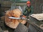 Скачать фото Строительство домов Спил деревьев, Удаление пней, 37944707 в Москве