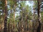 Новое фотографию  Лесной участок ИЖС, В престижном месте Наро-Фоминского р-на, д, Афанасовка 38601527 в Наро-Фоминске
