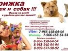 Скачать фото Услуги для животных Стрижка кошек и собак, Выезд на дом,Стрижка животных выезд в любой район Москва и Московская Область 39002107 в Москве
