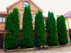 Уникальное фотографию Ландшафтный дизайн Продажа Деревьев и Кустарников в Москве 39156638 в Москве