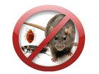 Новое фото Разные услуги Уничтожение клопов тараканов всех насекомых грызунов и паразитов в Москве 39330769 в Москве