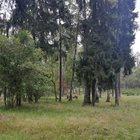 Продаю участок 3,55 га для коммер, использования, Ленинград, напр, 31 км