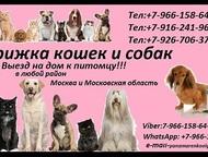 Стрижка кошек и собак Предлагаем к вашему Вниманию! свои услуги Стрижки кошек и