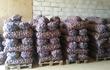 Предлагаем оптовые поставки картофеля. Урожай