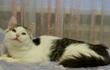 Ей всего 5мес, она пушистая бело-серая кошка,