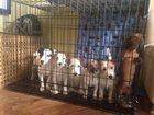 Фото в   Продаем клетки для собак. Есть 3 размера: в Санкт-Петербурге 4800