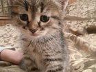 Фото в Кошки и котята Продажа кошек и котят Две тёмно-серые девочки и два дымчатых мальчика. в Москве 5