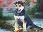 Фото в Собаки и щенки Продажа собак, щенков Три мальчишки и девчушка в поисках дома и в Москве 0